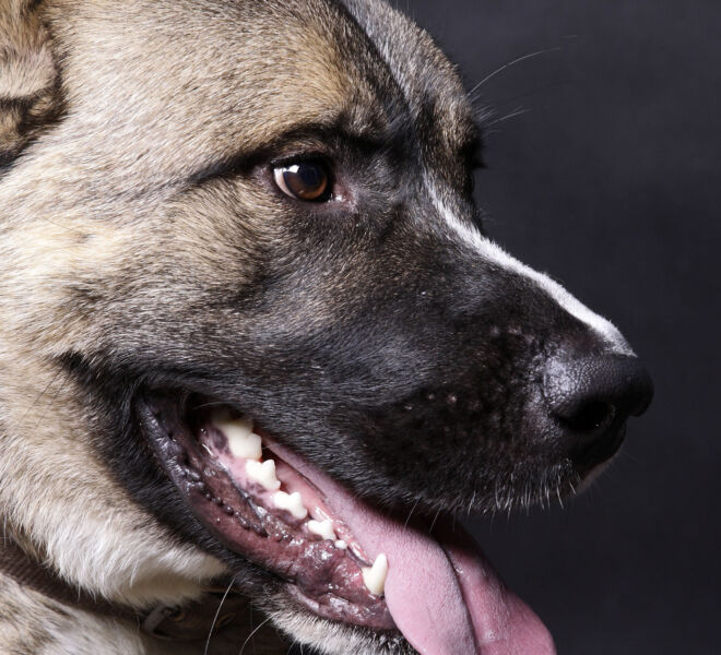 DogSq7